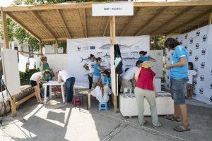 dand Tulcea day4 2068 300x200 - Sturionii au poposit la RowmaniaFest 2017