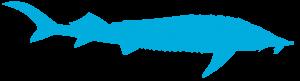 2acipenser ruthenus 300x81 - Ziua Mondială a Faunei Sălbatice: o nouă oportunitate de a conserva natura