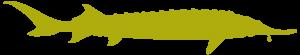 acipenser stellatus 300x55 - Ziua Mondială a Faunei Sălbatice: o nouă oportunitate de a conserva natura