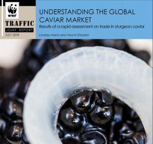 Caviar report 300x281 - Deficiențele sistemului de etichetare CITES a caviarului reprezintă un risc pentru sturioni