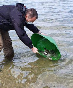 IMG 20200422 WA0003 249x300 - 300 de pui de nisetru au fost eliberați în Dunăre