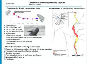 Intro slide Cambodia Irrawaddy dolphin conservation Phay Somany Cambodia 300x223 - Pescarii trebuie să facă parte din soluție, altfel vor deveni parte din problemă