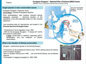 Intro slide France European Sturgeon National Plan of Action France 300x224 - Pescarii trebuie să facă parte din soluție, altfel vor deveni parte din problemă