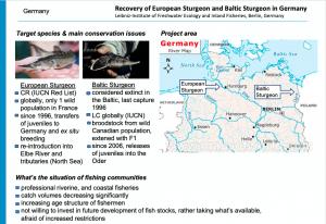 Intro slide Germany European and Baltic Sturgeon 300x206 - Pescarii trebuie să facă parte din soluție, altfel vor deveni parte din problemă