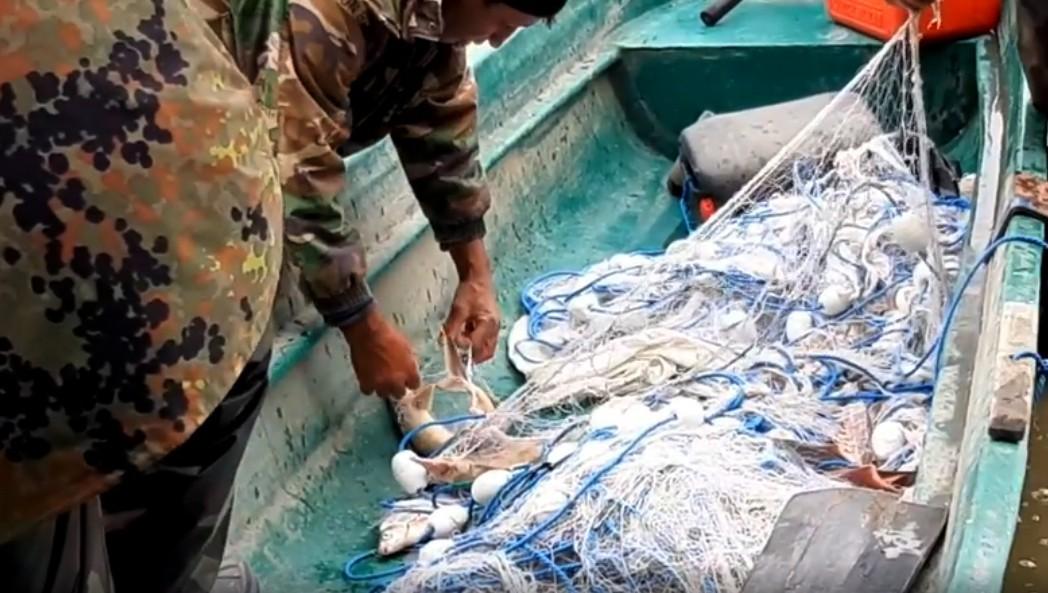 Autoritățile de control din Delta Dunării au eliberat în ultima lună 26 de sturioni prinși în plasele pescarilor